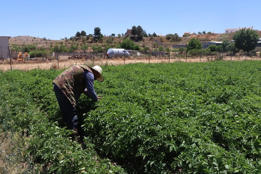 Photo of AlVelAl farming